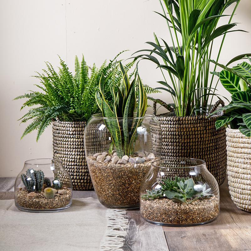 House Plants   Webbs, Wychbold